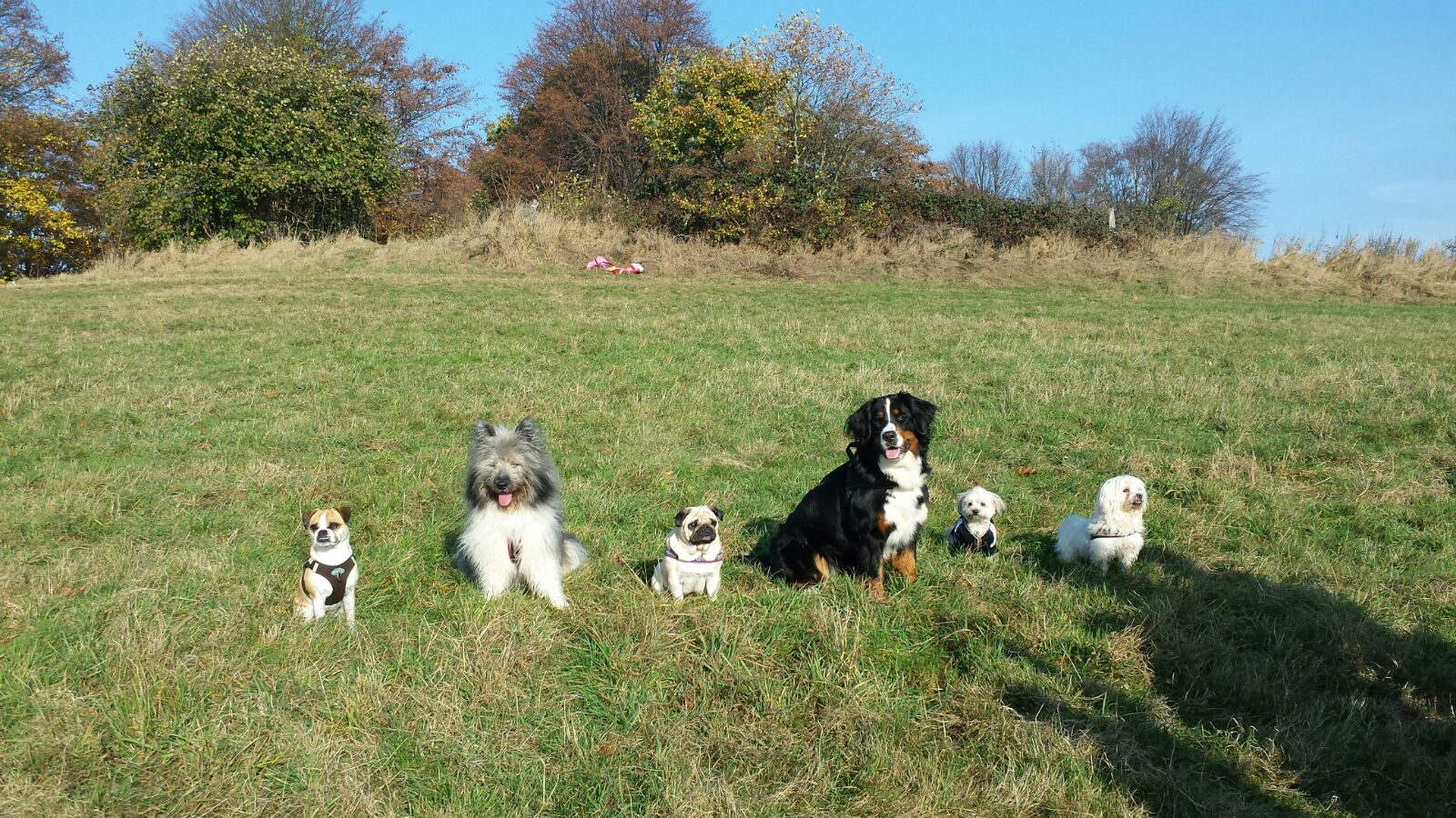 cool dog offenes Training 22