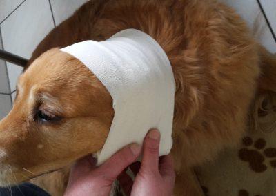 cool dog 1-Hilfe-16