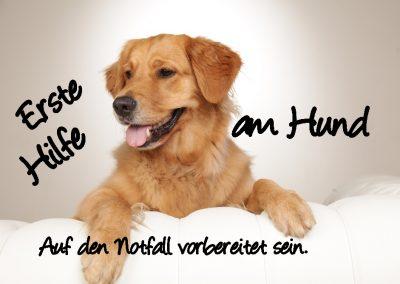 cool dog 1-Hilfe