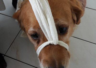 cool dog 1. Hilfe 4