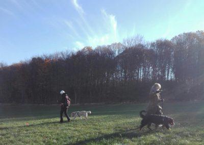 cool dog Basis Kurs 19