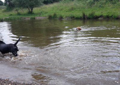 cool dog Wasser 1