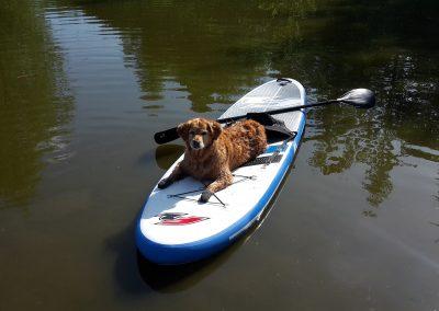 cool dog Wasser 4