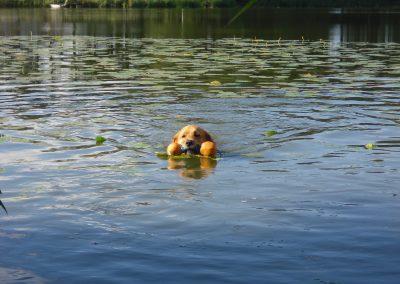 cool dog Wasser 6