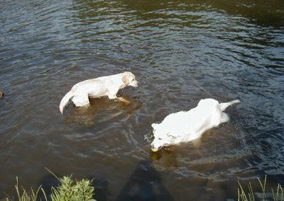 cool dog Wasser